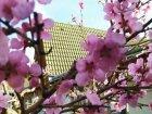 Várva várt tavasz a Koppányvölgye Idősek Otthonában